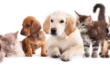 Pets & Animal: How to Train Kittens to Use the Litter Box