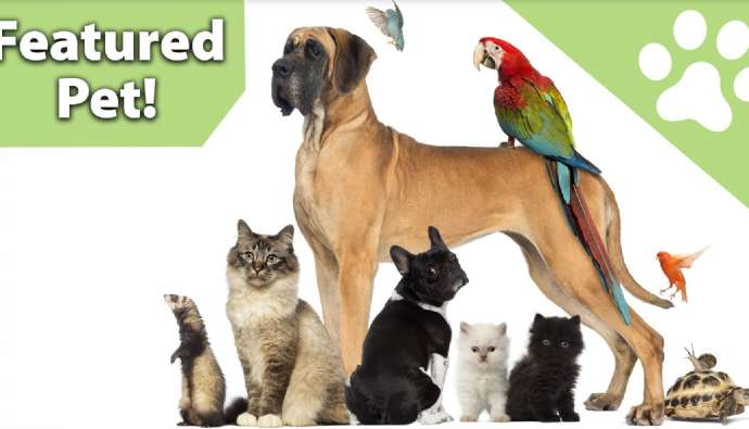 Pets Are Our Family Members and They Deserve the Best Care