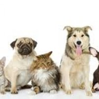 Dog Vaccination Requirements