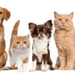 AKC Requirements for Approval of Breeders