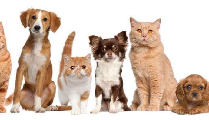 Cat Rescue Picture Gallery - Splash