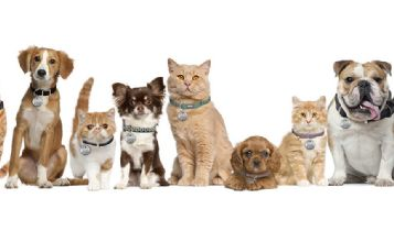 Pets & Animal: How to Identify Breeds of Rabbits, Dogs & Cats