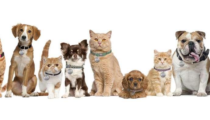 Cat Zoonotic Diseases