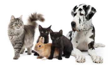 Pets & Animal: How to Get Rid of Cat Urine Smell
