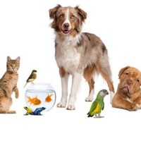 Home Remedies to Get Rid of Fleas on Kittens