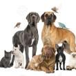 Cats and Predatory Behavior