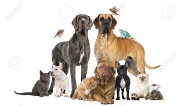 Pets & Animal: First Aid Supplies For Dogs You Should Know About
