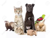 Herbal Treatments for Diabetic Cats