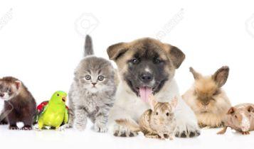 Pets & Animal: Elderly Cats
