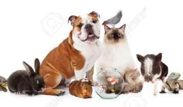Pets & Animal: Natural Ways to Get Rid of Yeast in Pet Ears