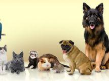 Rabies Symptoms in Kittens