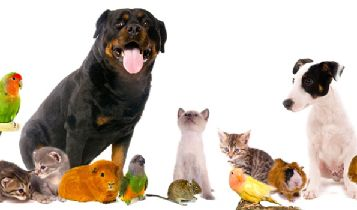 Pets & Animal: Dominant Dog Aggression – How to Prevent Your Dogs Aggression Towards Family Members