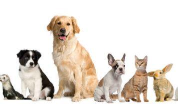 Pets & Animal: Exotic Pet Names - Z