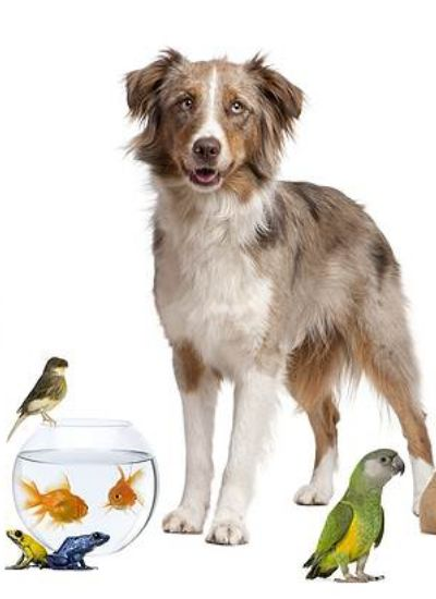 A Beautiful Aquarium - Start With Fish That Are Easy to Take Care Of