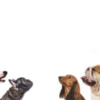 Dog Training - Train Your Dog's Obedience Yourself