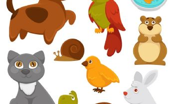 Pets & Animal: Birds That Collect Objects