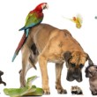 What to Do When a Dog Misbehaves?