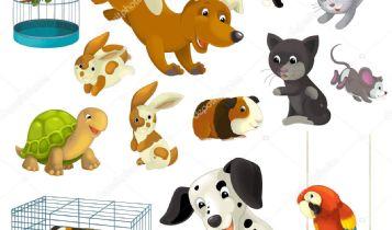 Pets & Animal: Emotional Factor of a Pet Cat