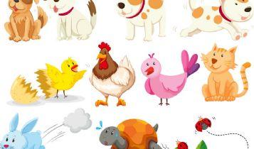 Pets & Animal: Training And Rewarding With Healthy Dog Treats