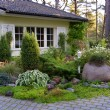 Ligustrum Tree Care & Trimming