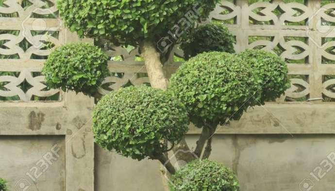 About Hardwood Veneer
