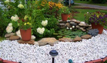 Home & Garden: Variegated Coprosma Bonsai Tree Information
